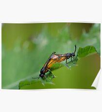 Large Rose Sawflies Mating Poster