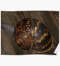 The Hidden Art of a Snail Shell Poster