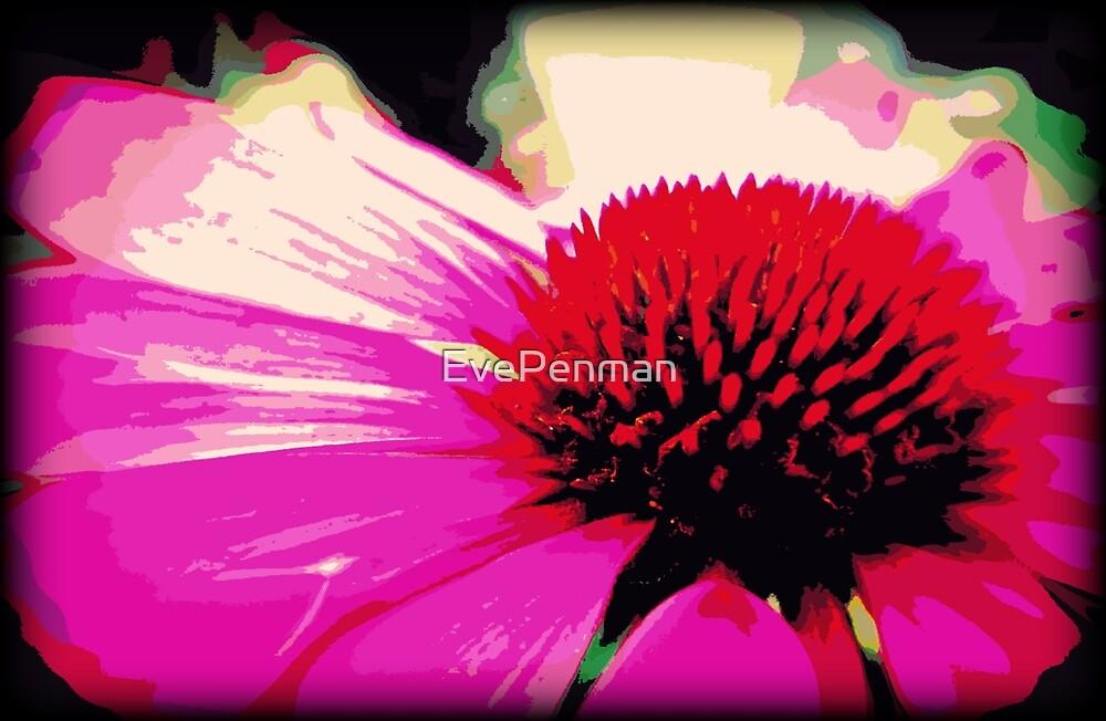 Cones & Petals by EvePenman