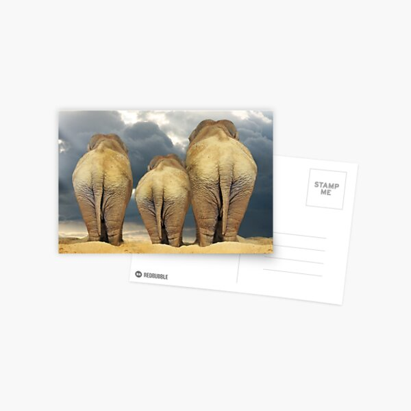Traveling Elephant Family  Postcard