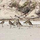 Shorebirds on Belongil Beach by byronbackyard