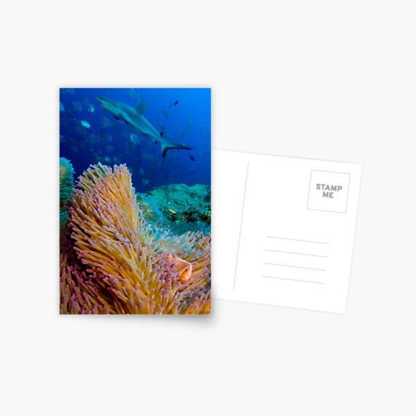Shark and anemone fish Postcard