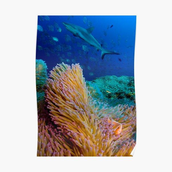 Shark and anemone fish Poster