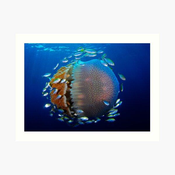 Jellyfish with fish Art Print