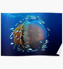 Jellyfish with fish Poster