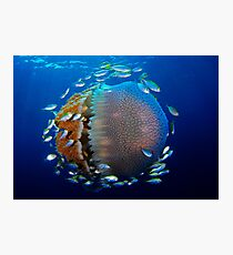 Jellyfish with fish Photographic Print