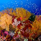 Colorful Corals - Tubbataha by Carlos Villoch