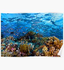 Coral Reef Poster