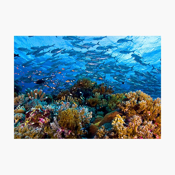 Coral Reef Photographic Print