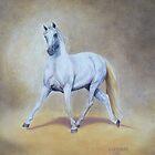 Lipizzaner Stallion by Jean Farquhar