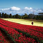 Tulip Farm by karinerad
