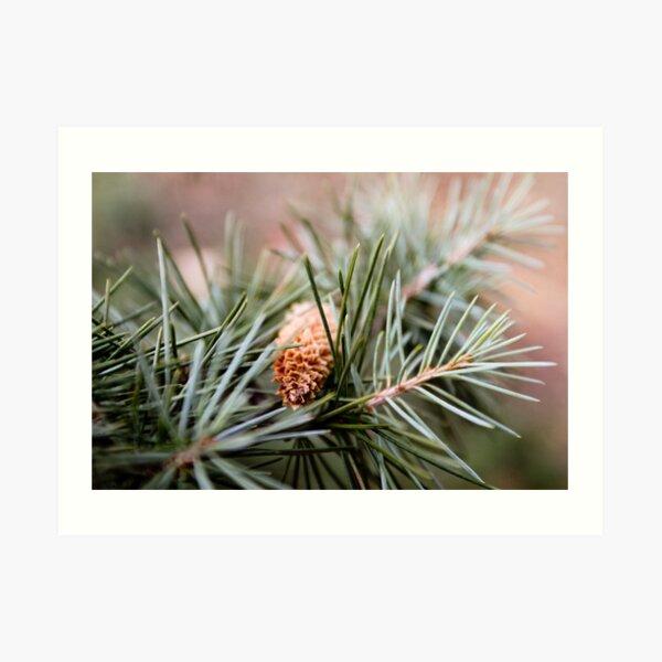 Plants: Pine fruits II Art Print