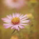 'tis figured in the flowers by sleepyjeanne