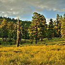 Clouds Over The Meadow in Flagstaff Arizona by K D Graves Photography
