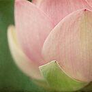 lotus by sleepyjeanne