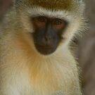 Monkey - Mzima spring, Tsavo, Kenya by citrineblue