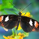 Butterfly on Blue Blur by Bonnie T.  Barry