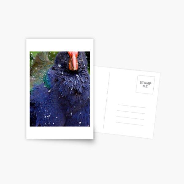 Takahe Splash Postcard