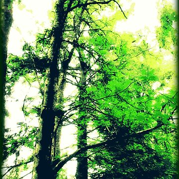 Ketchikan Trees by EvePenman