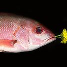 Red Snapper by Daniel Sorine