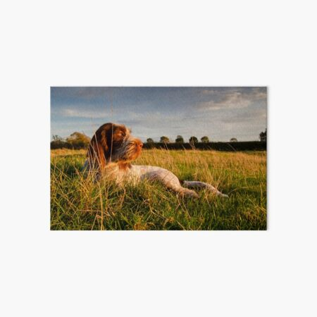 Spinone Puppy Sunset Art Board Print