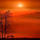 Country Sunset by Igor Zenin