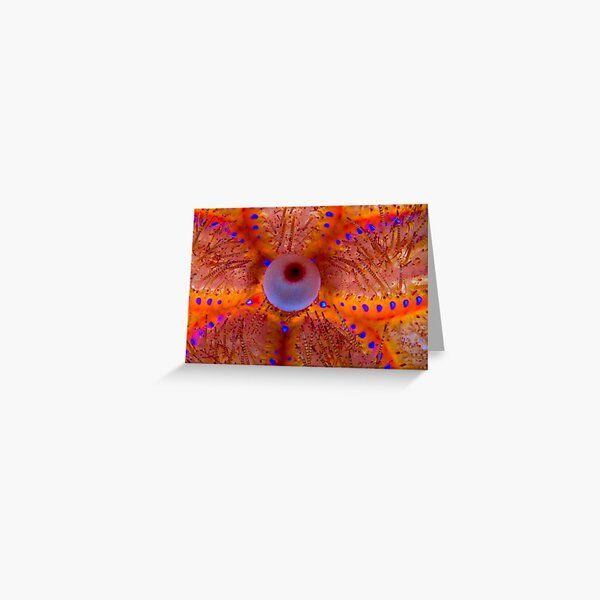 Fire Sea Urchin Greeting Card