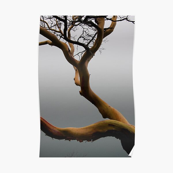 Arbutus tree in the fog Poster