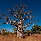 Boab tree by Erik Schlogl