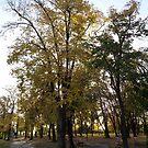 When autumn comes .... by Ana Belaj