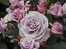 Roses in Rotorua by Kayleigh Walmsley