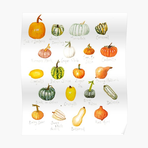 Pumpkin Varieties Poster