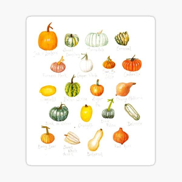 Pumpkin Varieties Sticker
