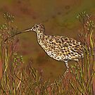 Curlew by lottibrown
