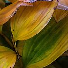 Leaf Roll by Eileen McVey