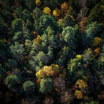 Forest Landscape - Aerial Photography by Nicklas81