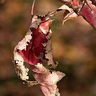 Maple Lace by Eileen McVey