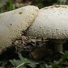 Intimate Mushrooms  by Jeff stroud
