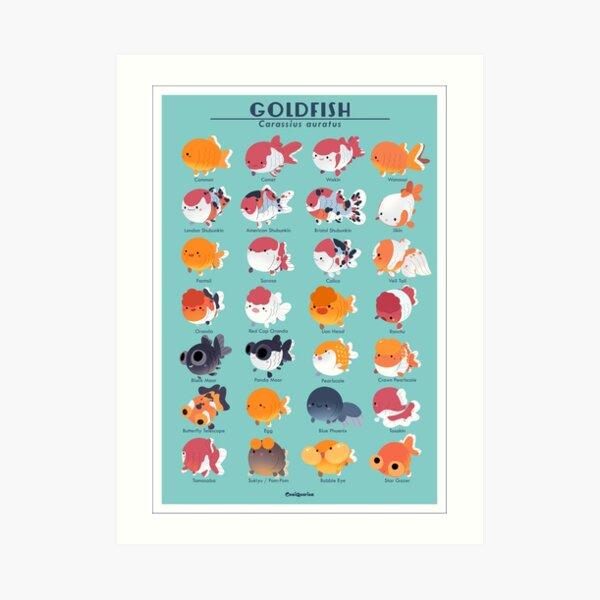 Goldfish Breed Poster Art Print