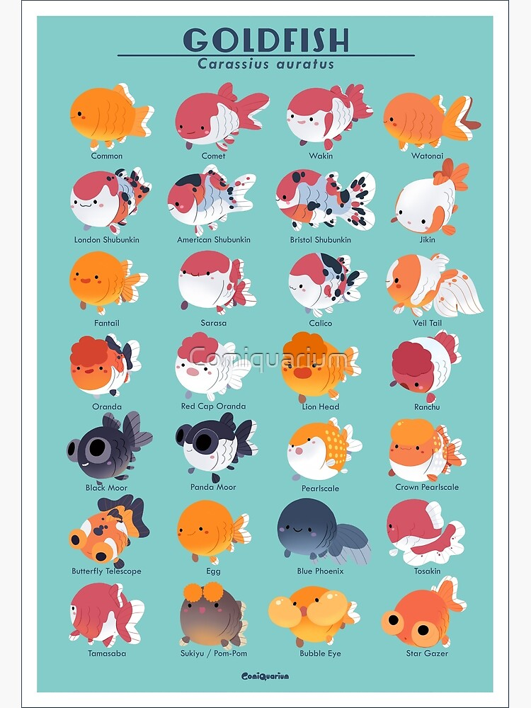 Goldfish Breed Poster by Comiquarium