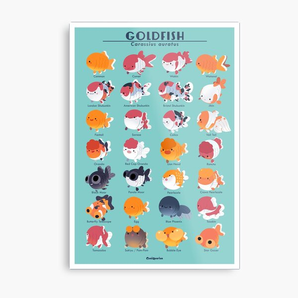 Goldfish Breed Poster Metal Print