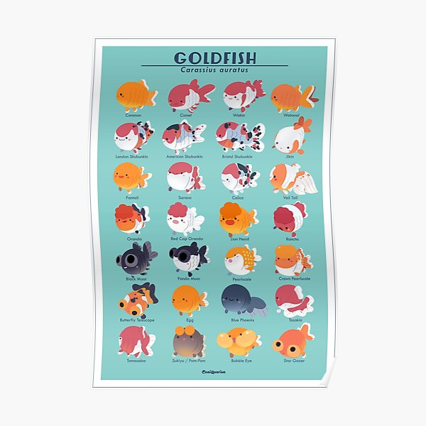 Goldfish Breed Poster Poster