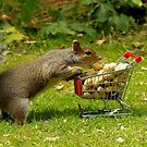 Squirrel with shopping trolley cart stocking up for winter  by Simon-dell