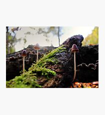 Looking For Faeries Photographic Print