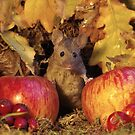 wild Autumn house mouse and  apple by Simon-dell