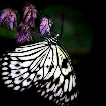 Tree nymph butterfly by missmoneypenny