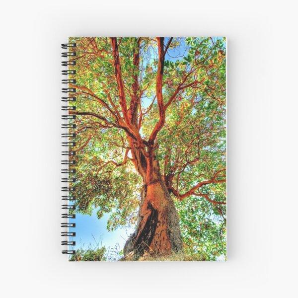 Shimmering Arbutus Spiral Notebook