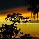 Florida sunset by David Lee Thompson