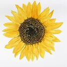 Bright and Cheery Sunflower by lisavonbiela