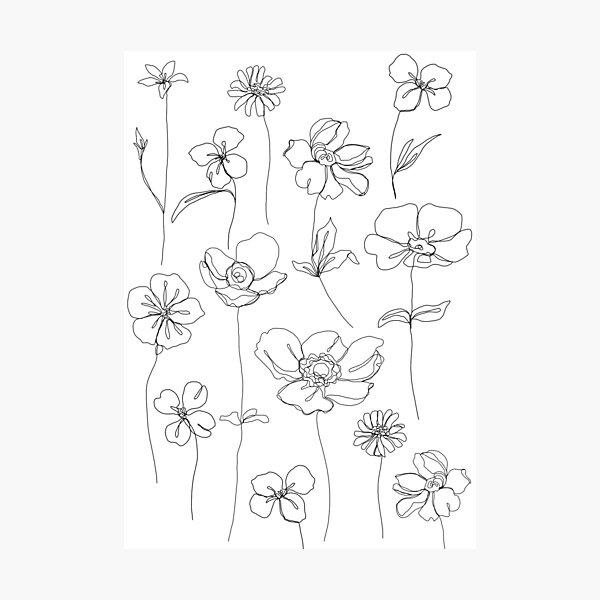 Botanical floral illustration - Botanicals White Photographic Print